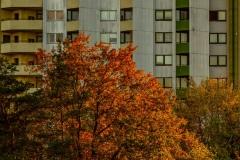 2020_11_05_Sonnuntergang_Mainzer_Sand_A7309151.jpg