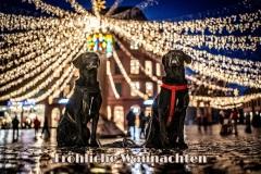 2020_12_12_Nachthundis_in_Mainzer_Altstadt_A7300733-Bearbeitet.jpg